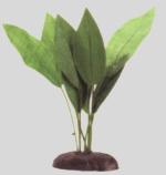 Echinodorus spp