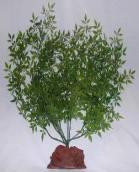 ROCKY MOUNTAIN GREEN LAVA ROCK SUPER PLANT