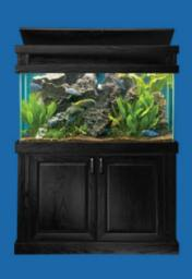 MODERN SERIES BLACK STAND AND CAP PICTURES WITH 90 GALLON ALL GLASS AQUARIUM