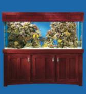 MODERN SERIES CHERRY STAND AND CAP PICTURED WITH 210 GALLON ALL GLASS AQUARIUM